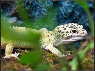 Рептилия домашнее животное