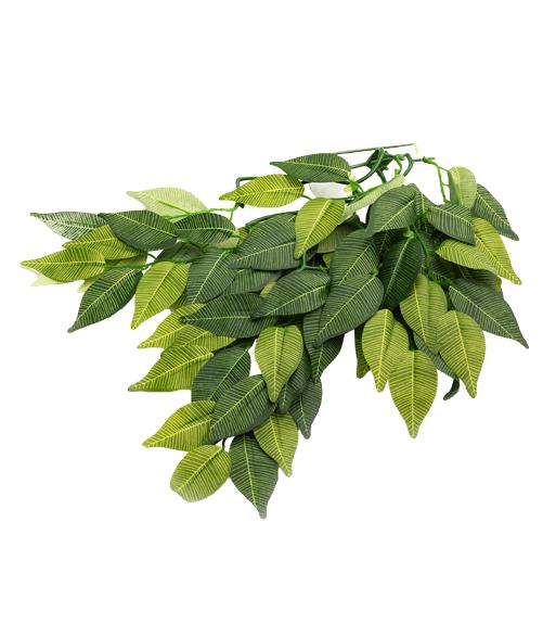 TP002 Banyan leaves
